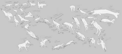 Phylogeny of Ranamonarchia by Sheather888