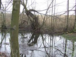 Creepy pond by OOOri