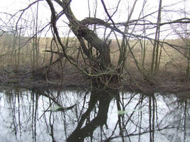 Creepy tree by the pond by OOOri