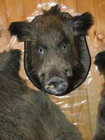 Stuffed hog's head by OOOri
