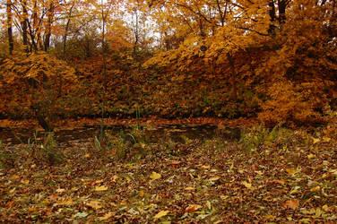 autumn swamp by OOOri