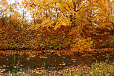 Autumn swamp 2 by OOOri