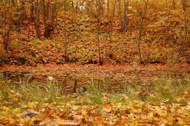 Autumn swamp 9 by OOOri