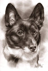 Corgi portrait by Mirnamiu