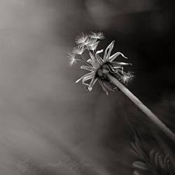 Spring time.. by Azram