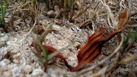 Sand Close-up by peanutbutterhunter
