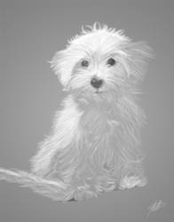 White Dog by Karbacca
