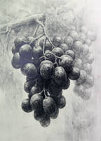 grapes 2 by indiart3612