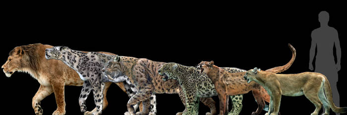 Big cats... into big poster? by Dantheman9758
