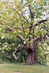 Buckingham Palace Garden Tree by mmp-stock