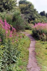 Doune Castle Purple Pathway by mmp-stock