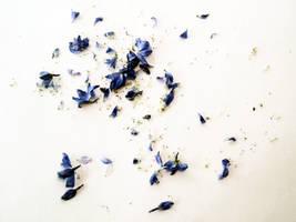 FREE STOCK, Flower Debris by mmp-stock