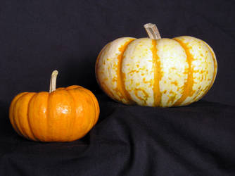 BASIC TERMS, Pumpkin, Mr. 300 by mmp-stock