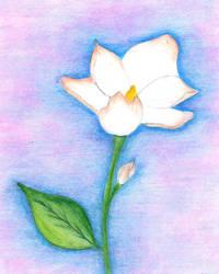 sweet magnolia by InnocenceAgain