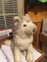 Unknown wolf plushie by TwinTowergal