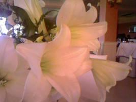 Random Lilies by ReevScythe
