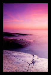 Purple Moment by Yaninah