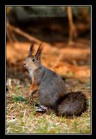 Squirrel by Yaninah