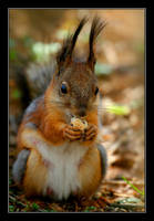 Squirrel. by Yaninah