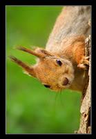 Squirrel Portrait by Yaninah