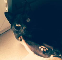 Gato my sweet black cat by MalwinaD