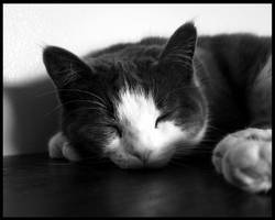Sleepy by ryanpm