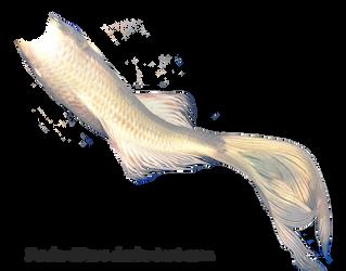 Mermaid Tail 06 (White Koi) by DeviantRoze