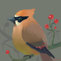 Cranky Waxwing by gryllus