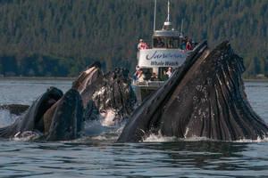 Whale watching in Juneau, Alaska by claudiogiacaman