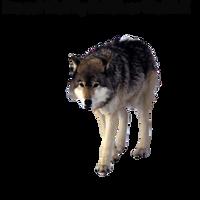 Precut Wolf2 by XxXSilver-WolfXxX