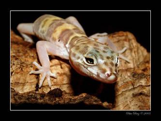 Wild Gecko by revxus
