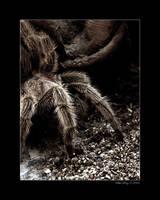 The Tarantula by revxus