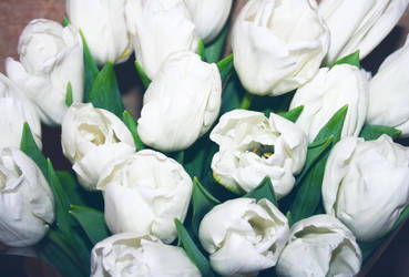 White tulips by OV-art