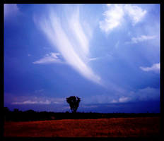 cloud. lonely tree by withak