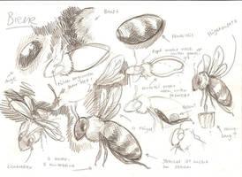 Bee study by Sheevee