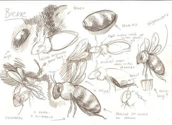 Bee study by Sheevee