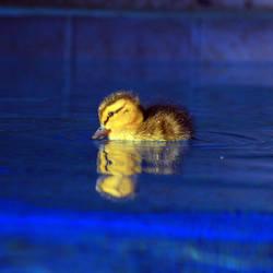 Nodding-DuckSM by Soul-Schism