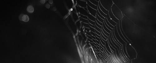caught in your web by serpentrouge
