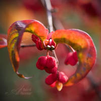 .Fall. by AstridT