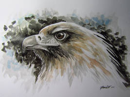 'Wedge-tailed Eagle' Inktober challenge Day 11 by CherishArt
