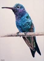 Hummingbird by CherishArt