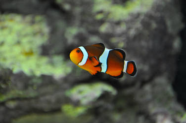 Nemo by Florinachis