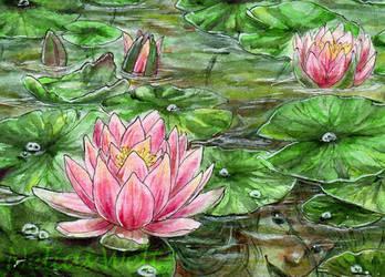 Water lilies by NeliaViola
