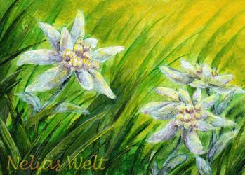 Edelweiss by NeliaViola