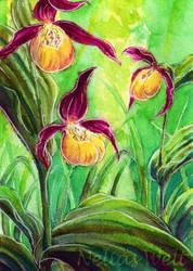 Lady's-slipper orchid by NeliaViola