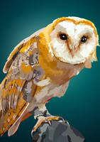 Barn Owl vector by elviraNL