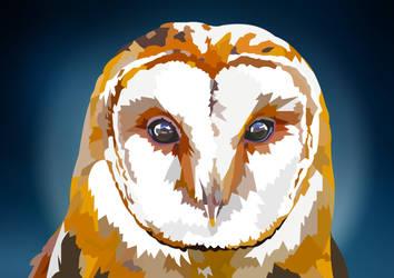 Barn Owl closeup by elviraNL