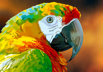 Parrot closeup by elviraNL
