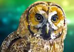 Owl - Eyes of Wisdom by elviraNL