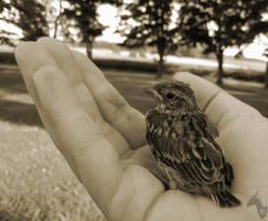 Birdy by DargonXKS